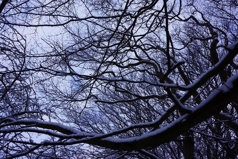 Vinterhave-midtjanuar-2016 (7)