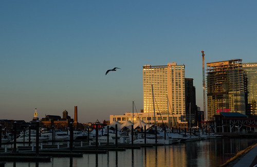 city blue sunset sky bird water canon reflections boats harbor fly view seagull maryland baltimore innerharbor