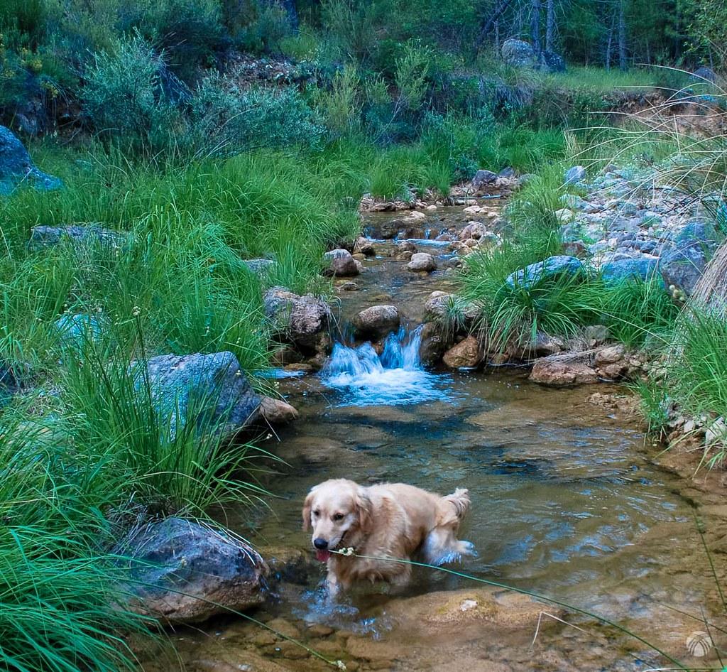 Baño en el arroyo de la Camarica