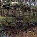 Jungle Bus by Out of Order - Urban Decay