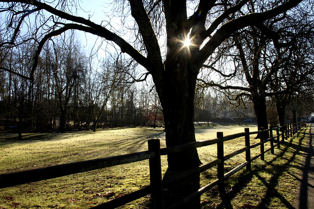 Tinkerbell Tree