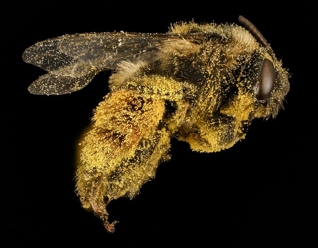 Pollen Party!