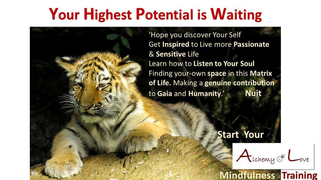 AoL Mindfulness by Nataša Pantović Your Highest Potential is Waiting