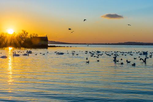 Crépuscule à l'étang de Bolmon