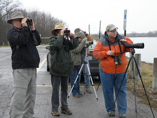 Wellington Upground Reservoir and Findley State Park March 13, 2016 Field Trip | by Western Cuyahoga Audubon