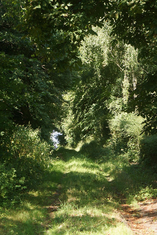 Tjoernbjerg-Have-2014-07-17 (4)