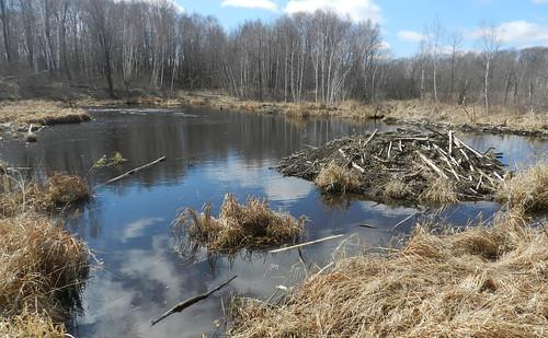 Lake Alexander Woods SNA