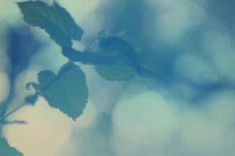 blur-dreamy-texture-texturepalace-60