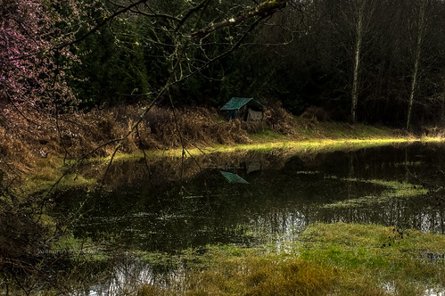 trees light house lake green nature water colors grass architecture reflections dark landscape outdoors spring pond nikon blind outdoor hunting serene shack waterscape jeanmarie duckblind jeanmariesphotography jeanmarieshelton