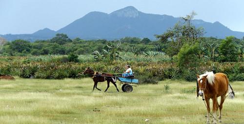 horses horse outdoor cuba grassland holguin rafaelfreyre plismo playablancacuba