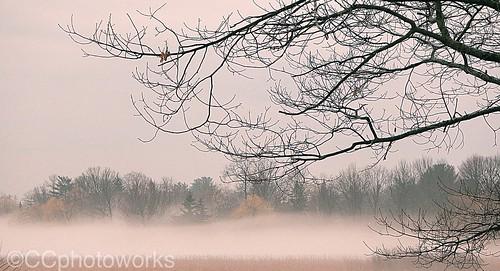 yorkregionontario foggyweather westher foggy fog nature outdoors landscapes scenics misty mist stock stockphotography ccphotoworks