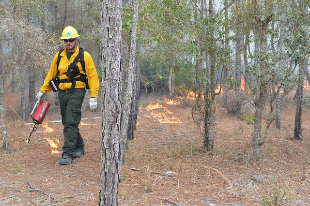 Prescribed Burning in Florida