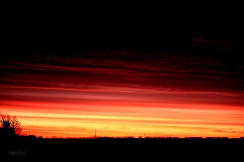 morning red sky orange tree field tangerine clouds sunrise dawn twilight explore powerline cambridgeshire nightday sunbreak daybreak darklight hedgerow civiltwilight telegraphpoles melbourn lightdark 520795530028323