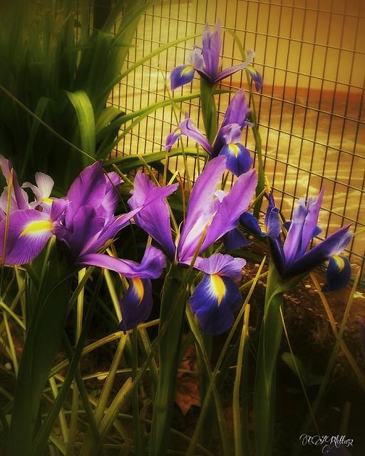 La primavera...
