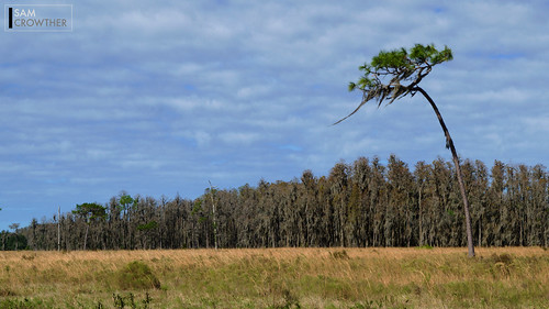 blue trees sky cloud brown tree green nature field grass yellow pinetree pine clouds landscape outdoors moss nikon day wind florida cloudy farm overcast front spanishmoss breeze d5300