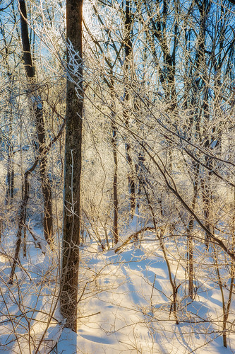 winter snow backlight sunrise woods outdoor hoarfrost eastonpa bushkillcreek nikond4 blizzard2016