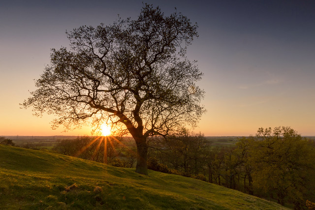 Croft Hill Tree at Sunset