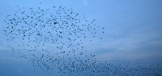 Swarm   by vapour trail