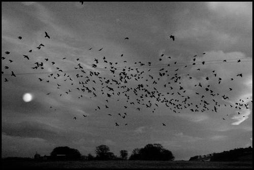 sunrise d50 scotland blackwhite nikon aberdeenshire crows balloch alford cairnballoch