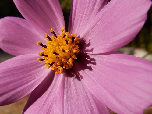 San Cristobal - bloem