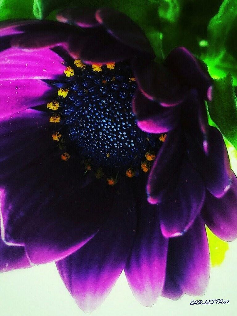 Macro fiore...
