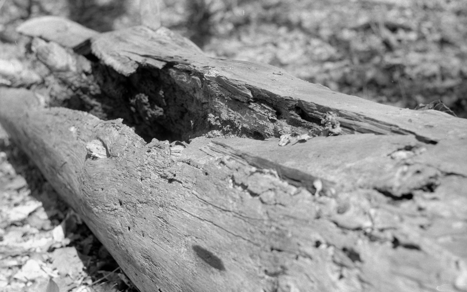 Camera Review Blog No. 36 - Ernst Leitz Leica IIIc