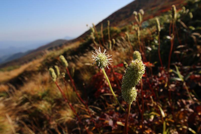 2014-09-28_00337_栗駒山.jpg