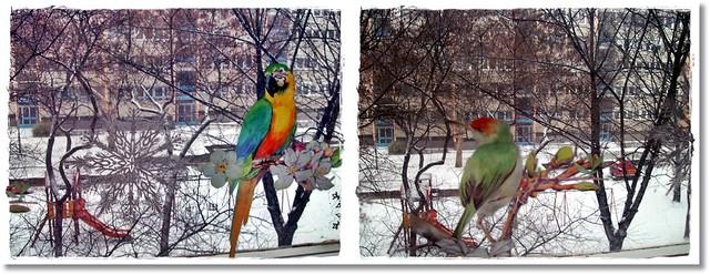 First snow in the park and the glass matrix (:-Első  hó a parkban és az üvegmatrica (:
