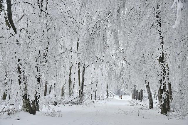 *Winter Wunderland*