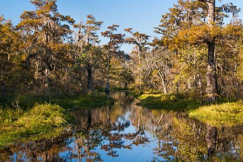 trees usa lake sunrise pond louisiana atchafalayabasin bayou cedar swamp wetlands cypress riverdelta lakemartin baldcypress