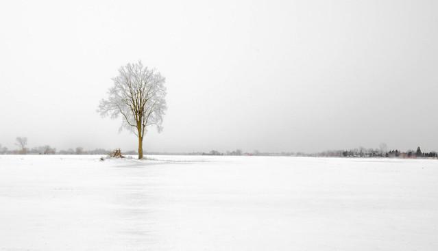 Single Crystallized Tree on Frozen Field