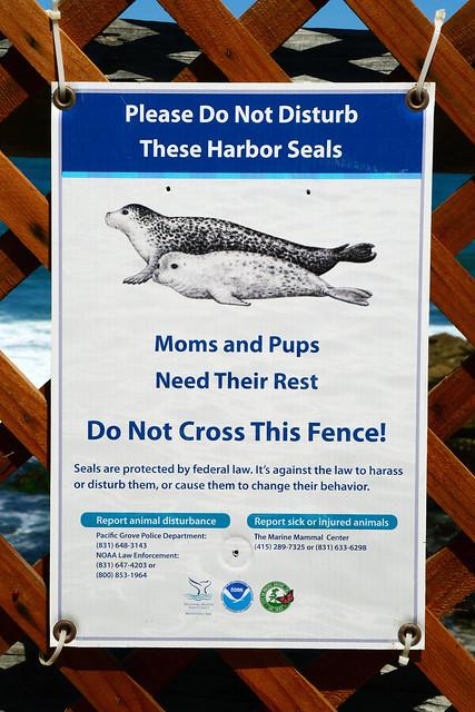 Don't Disturb the Seals!