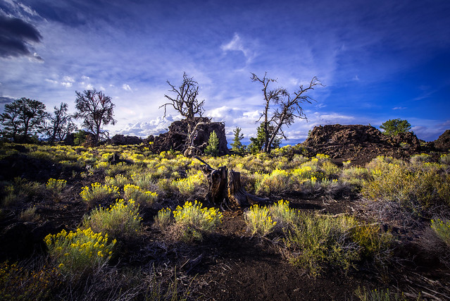 Devils Orchard - Craters of the Moon National Monument - The lonely tree - Idaho
