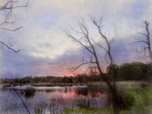 Last light, Southern marsh | by Solly Avenue