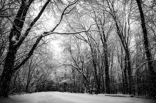 road trees winter blackandwhite snow cold nature way outdoor