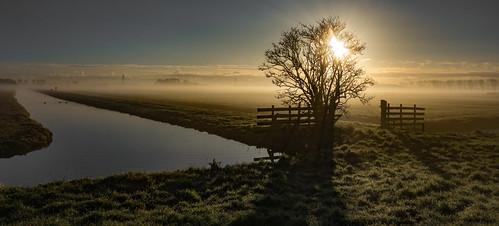 mist tree water fog sunrise fence canal serene grassland tranquil grassfield sundawn tmt groundfog nederlandvandaag unlimitedphotos middendelftland tmtt treemendoustreetuesday