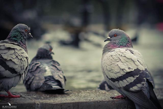 Tinguely-Brunnen Pigeons