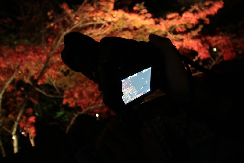20141122-武奈ヶ岳&京都ライトアップ-0744.jpg