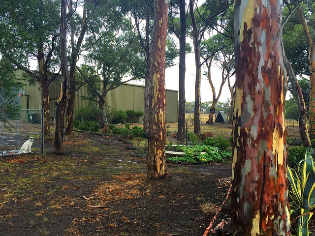 Outback backyard