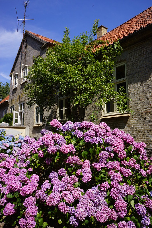Tjoernbjerg-Have-2014-07-22 (2)