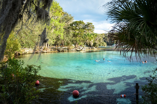 fish water spring florida springs ocalanationalforest silverglensprings