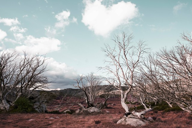 Pretty Valley Ghost Forest