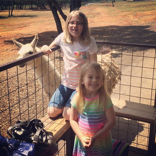 Highly recommend the Exotic Safari Zoo in Johnson City, TX. We got to feed and pet llamas, zebras, camels, deer, elk, buffalo and a dozen other animals. SO COOL. | by poobou