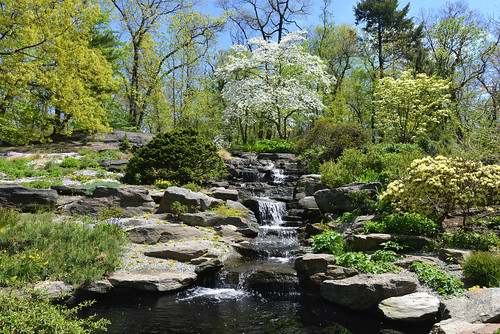 newyorkcity landscapes waterfalls newyorkbotanicalgarden nycparks cornusflorida floweringdogwood alpinerockgarden