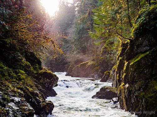 britishcolumbia canada cobblehill cowichan forest koksilah moss rapids river sunlit trees vancouverisland water