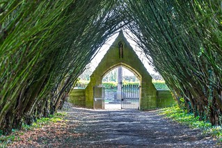 YEW ARBOUR AT THE ENTRANCE TO AN OLD GRAVEYARD [MAYNOOTH COLLEGE]-111967   by infomatique