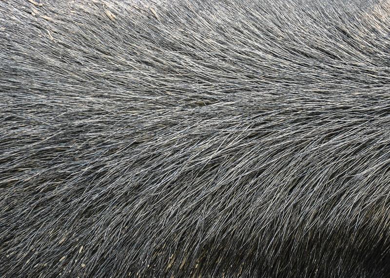 animal-fur-closeup-texturepalace-18