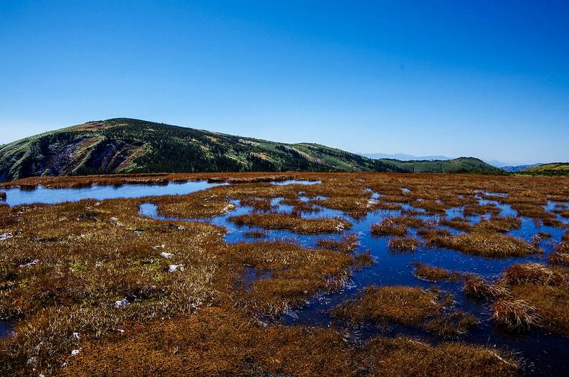 平ヶ岳の高層湿原