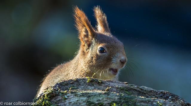 Meet mr. squirrel