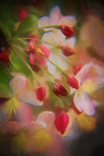 Crab Apple Blossom 9082 Timp OGbBR+TrnrStrm2 wm